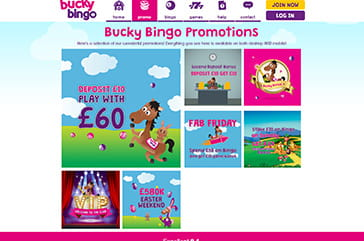 Great promotions for everyone on Bucky Bingo
